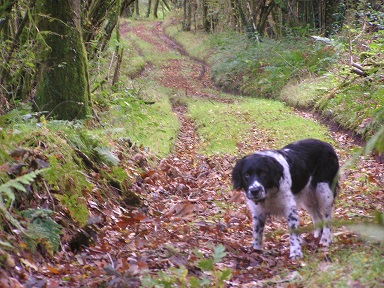 Molly on the woodland path
