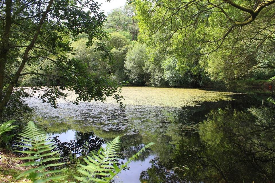 Penpynfarch lake in high summer