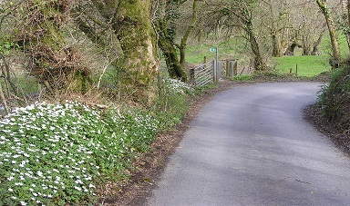 Lane from Llandysul